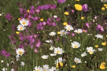 2017  – maart  –  Vlinderstichting: Idylles Zuid-Holland