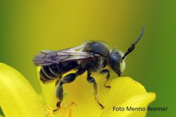 2017  –  Ideecafé – 22 mei  – Verrassende bijenfeiten en handige tips voor je eigen tuin, straat, wijk en stad