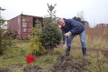 2017  –  Vrij Groen Kerstbomenasiel gaat open: 12 december bomen halen, januari bomen brengen