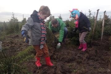 2018  –  Recordaantal bomen naar kerstbomenasiel gebracht, januari
