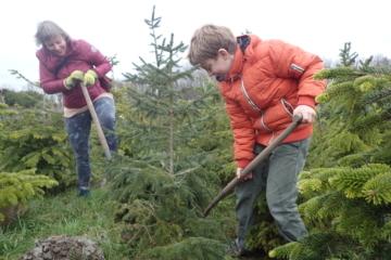 Vrij Groen Kerstbomenasiel: praktische info seizoen 2018-2019