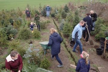 2019 – 2 februari  – Ruim 200 bomen in geplant in het kerstbomenasiel