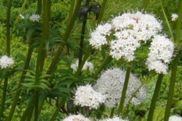 —  Zomer en herfst 2019  —   Agenda project 'Ontdek natuur in jouw buurt'