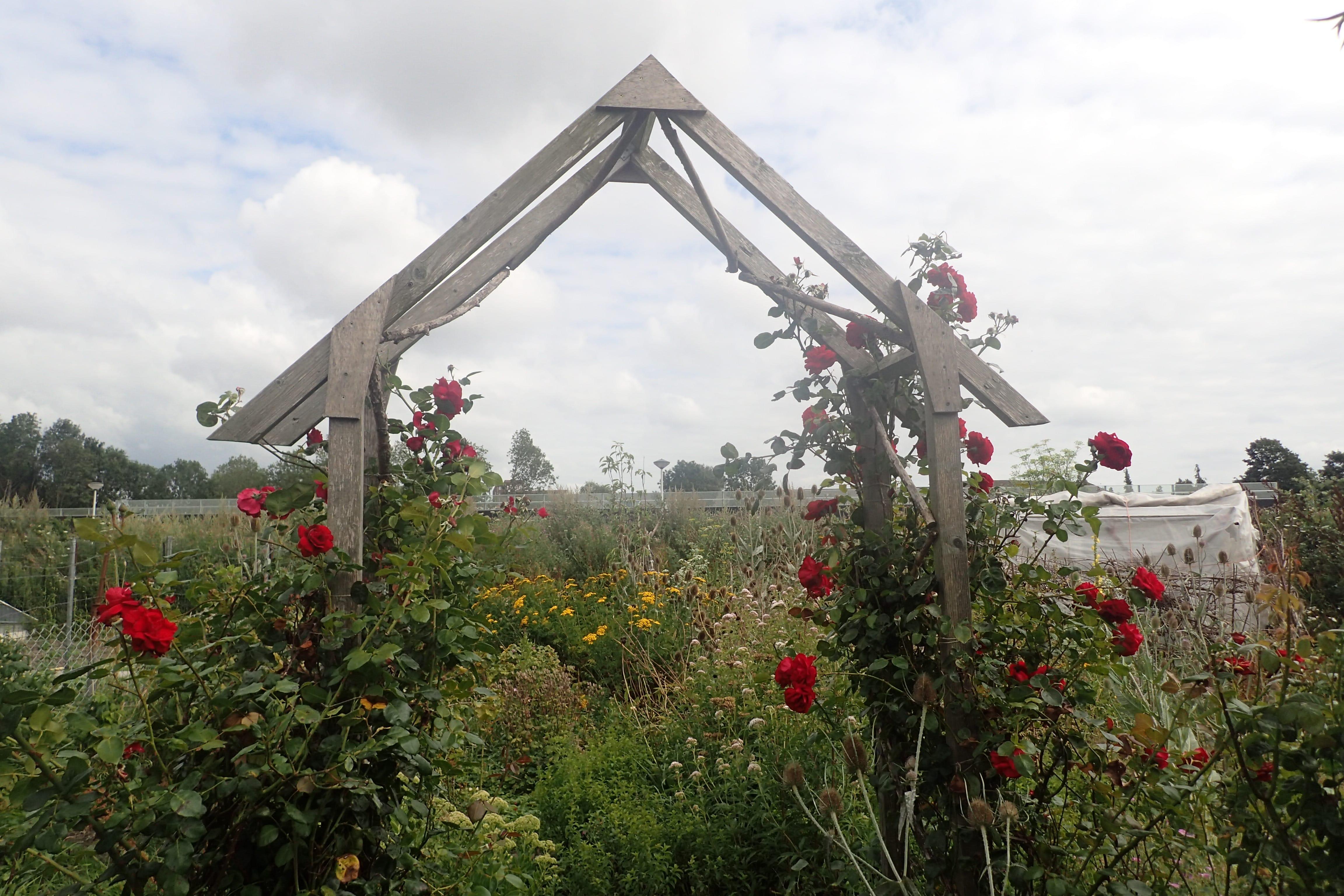 Bloemen planten: Natuurwerkdag bij Vrij Groen op 2 november
