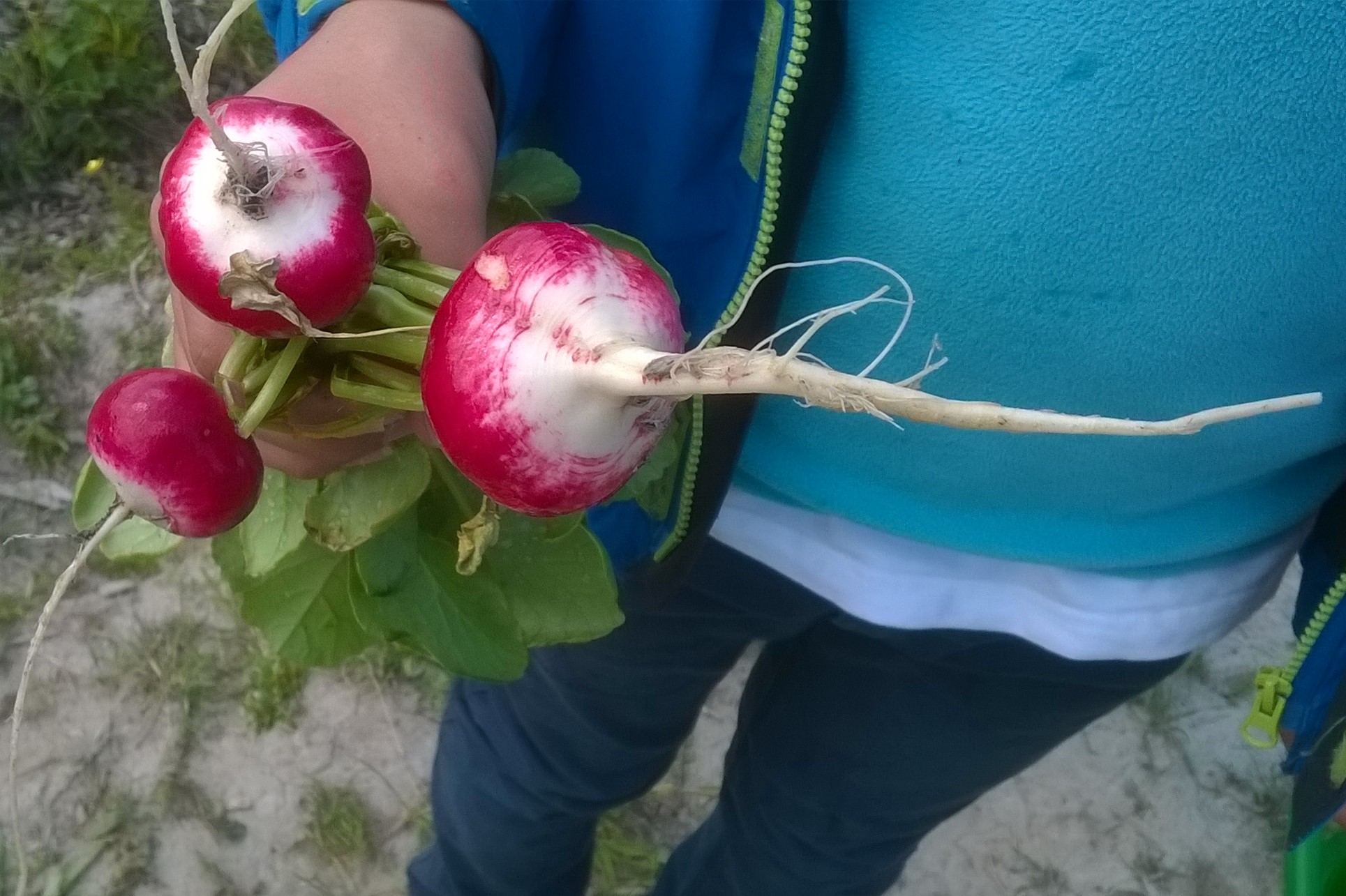 Goed Ideecafé 28 oktober: Eten uit de tuin en de buurt, met je kinderen