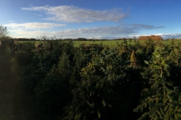 Vrij Groen Kerstbomenasiel feestelijk geopend met gedicht. Nieuwe kerstbomen welkom!