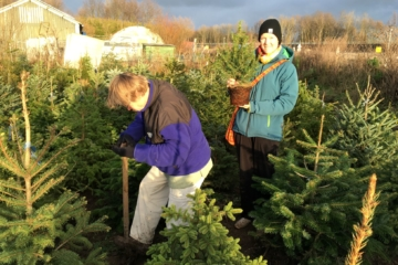 Ruim 200 bomen in het kerstbomenasiel bij Vrij Groen
