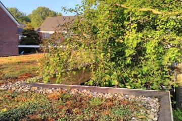 2020 – 15 juni – Online Ideecafé – Webinar 'Jaar van het Dak' – Groenblauwe dakdromen in Leiden
