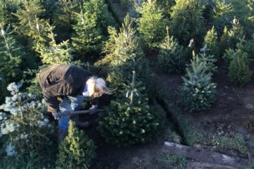 Nieuwe kerstbomen welkom bij kerstbomenasiel. Reserveer een tijd