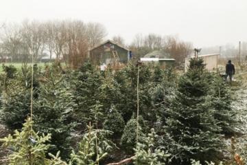 Het kerstbomenasiel van Vrij Groen staat weer vol bomen